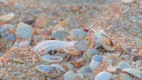 Piccolo piuma nella sabbia stock footage