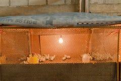 Piccolo pollo in azienda agricola Fotografia Stock