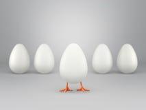 Piccolo pollo che esce da uovo, isolato su fondo bianco Immagine Stock Libera da Diritti