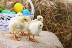 Piccolo pollo su un mucchio di fieno Fotografia Stock Libera da Diritti