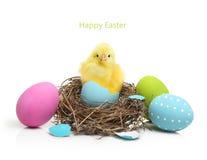 Piccolo pollo sveglio che esce dall'uovo di Pasqua fotografie stock libere da diritti