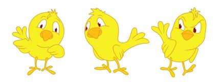 Piccolo pollo tre Fotografia Stock