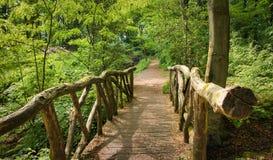 Piccolo ponte in composizione naturale nella foresta verde intenso immagine stock