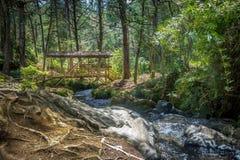 Piccolo ponte di legno coperto variopinto - Parque Arvi, Medellin, Colombia Immagini Stock