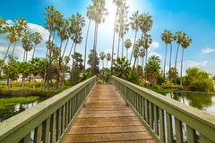 Piccolo ponte di legno nel lago echo Park a Los Angeles immagini stock