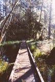 Piccolo ponte stretto di legno in una foresta sopra un piccolo fiume fotografie stock libere da diritti
