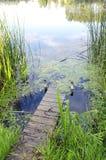 Piccolo ponticello del fiume. flora verde naturale dell'acqua Fotografia Stock