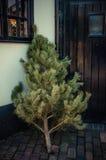 Piccolo povero albero Fotografie Stock