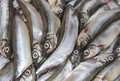 Piccolo primo piano fresco del pesce di mare immagini stock