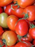 Piccolo primo piano rosso del pomodoro Immagini Stock