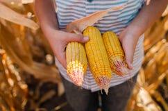 Piccolo ragazzo caucasico sull'azienda agricola del cereale Stagione della raccolta SMI felice fotografie stock libere da diritti