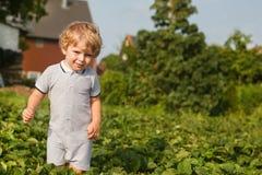 Piccolo ragazzo del bambino sull'azienda agricola organica della fragola Immagine Stock