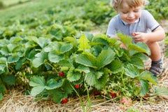 Piccolo ragazzo del bambino sull'azienda agricola organica della fragola Fotografie Stock Libere da Diritti