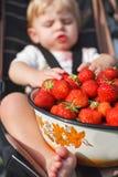 Piccolo ragazzo del bambino sull'azienda agricola organica della fragola Immagini Stock Libere da Diritti