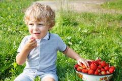Piccolo ragazzo del bambino sull'azienda agricola organica della fragola Immagini Stock