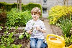 Piccolo ragazzo prescolare sveglio del bambino che pianta le piantine dell'insalata verde in primavera Fotografia Stock