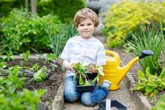 Piccolo ragazzo prescolare sveglio del bambino che pianta le piantine dell'insalata verde in primavera Fotografia Stock Libera da Diritti