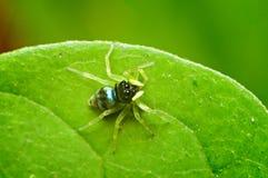 Piccolo ragno Fotografia Stock Libera da Diritti