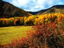 Piccolo ranch nella caduta Fotografie Stock