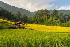 Piccolo riparo al terrazzo del riso di Mae Klang Luang Fotografia Stock Libera da Diritti