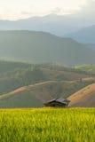 Piccolo riparo nel giacimento del riso con il fondo della montagna, Chiang Mai Immagine Stock