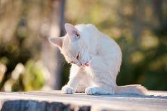 Piccolo ritratto del gatto Fotografie Stock Libere da Diritti