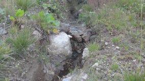 Piccolo ruscello della montagna stock footage