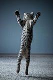 Piccolo salto del gattino fotografie stock libere da diritti