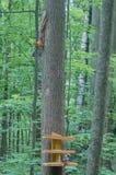 Piccolo scoiattolo e un uccello sull'alimentatore immagini stock libere da diritti