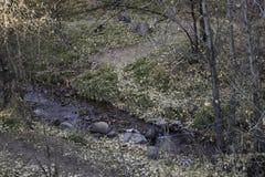 Piccolo scorrimento dell'acqua Fotografia Stock Libera da Diritti