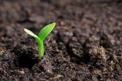 Piccolo semenzale verde fotografia stock