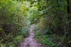 Piccolo sentiero nel bosco nella vista di stagione di autunno con luce del giorno Fotografia Stock