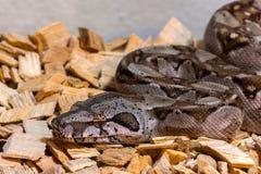 Piccolo serpente Fotografia Stock Libera da Diritti
