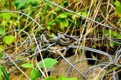 Piccolo serpente sulla pietra fotografia stock libera da diritti