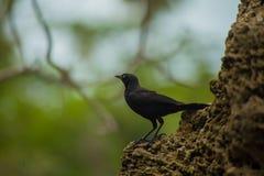 Piccolo sguardo dell'uccello fotografia stock