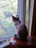 Piccolo sguardo marrone del gattino fuori dalla finestra Immagine Stock Libera da Diritti