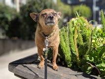 Piccolo sole felice del cane che prende il sole sul contenitore di fiore con con le piante ed il marciapiede vaghi nei precedenti fotografie stock libere da diritti