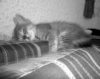 Piccolo sonno del gattino Immagine Stock Libera da Diritti