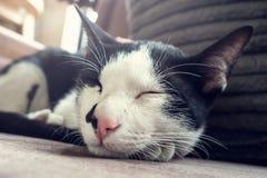 Piccolo sonno di ai del gatto Immagine Stock