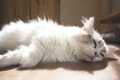 Piccolo sonno sveglio del gattino Immagini Stock Libere da Diritti