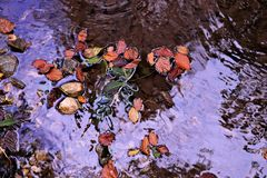 Piccolo stagno nel tempo di autunno Fotografie Stock Libere da Diritti