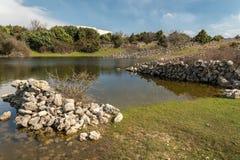 Piccolo stagno, posto di innaffiatura per le pecore in primavera Fotografie Stock Libere da Diritti