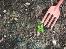 Piccolo strumento della vanga e della plantula con il fondo del suolo e la copia s Fotografia Stock Libera da Diritti