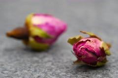Piccolo tè Rosa fotografia stock libera da diritti