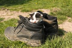 Piccolo taglio in stivali Fotografie Stock