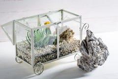 Piccolo terrario con l'ecosistema in tensione di auto e del cactus Immagine Stock Libera da Diritti
