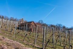 Piccolo tugurio in mezzo al wineyard fotografia stock libera da diritti