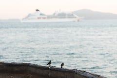 Piccolo uccelli appollaiati sull'orlo del molo della torpedine ad alba, San Francisco fotografia stock