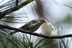 Piccolo uccello immagini stock