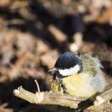 Piccolo uccello Fotografie Stock Libere da Diritti